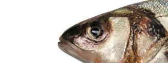 Hlavné jedlá z rýb